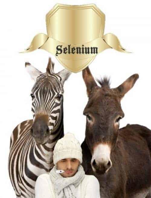 selenium schildklier immuunsysteem2